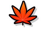 MAPLE 紅葉